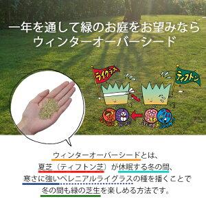 オーバーシード用芝の種ペレニアルライグラス(種)500g(少量タイプ)ティフトン芝少スペース常緑オーバーシード冬芝種追い撒き用芝生種