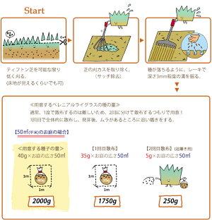 芝生種オーバーシード用芝の種ペレニアルライグラス(種)500g(少量タイプ)ティフトン芝少スペース常緑オーバーシード冬芝種追い撒き用芝生種