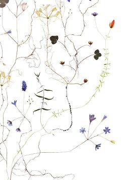 ★草木の標本アートポスターSWEDISHTREE50x70cm北欧ポスターインテリアタペストリー
