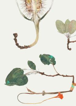 ポスター北欧草木の標本アート小枝MAYTWIGSサイズ50x70cmアートおしゃれインテリアタペストリー新生活デザイン部屋模様替えナチュラル高級感壁かけ素材北欧雑貨
