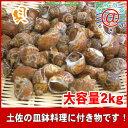 貝 ばい貝 送料無料 【お徳用】生冷凍 ばい貝2kg「煮貝でいただくのが一番、甘辛く煮付けてバイ貝を!」貝料理や皿鉢料理オススメ
