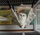 【メール便送料無料】【同梱不可】さらさらモコモコペットハンモックM/フェレット猫
