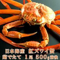 日本海産茹でたて紅ズワイ蟹1尾500g前後【かにカニ蟹】