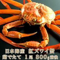 日本海産茹でたて紅ズワイ蟹1尾800g前後【かにカニ蟹】