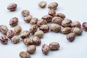 うずら豆100g【常温便】【豆】【PintBean】【ピント豆】【ラジマチットカブラ】【RajmaChitkabra】【インゲン豆】【RCP】