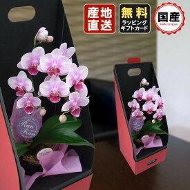 胡蝶蘭 ミニ 胡蝶蘭 ミディ 胡蝶蘭 ギフト 2WAYテーブルボックス入り 1本立 ピンク/お花 プレゼント 開店祝い 母の日 父の日 お祝い 贈り物