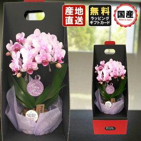 胡蝶蘭 ミニ 胡蝶蘭 ミディ 胡蝶蘭 ギフト 2WAYテーブルボックス入り 2本立 ピンク/お花 プレゼント 開店祝い 母の日 父の日 お祝い 贈り物