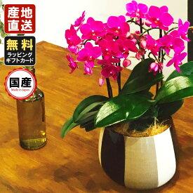 胡蝶蘭 ミニ 胡蝶蘭 ミディ 胡蝶蘭 ギフト モノトリコ鉢 5.5号鉢 3本立/お花 プレゼント 開店祝い 母の日 父の日 お祝い 贈り物