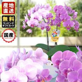 胡蝶蘭 ミニ 胡蝶蘭 ミディ 胡蝶蘭 ギフト リンラン寄せ 4.5号鉢 2本立/お花 プレゼント 開店祝い 母の日 父の日 お祝い 贈り物