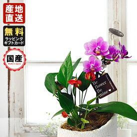 胡蝶蘭 ミニ 胡蝶蘭 ミディ マウント鉢 4号鉢植え1本立て アンスリウム寄せ /お中元 ギフトに花のプレゼント 開店祝いに 母の日 父の日