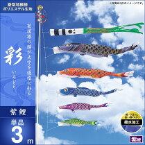 彩-紫鯉3m・単品