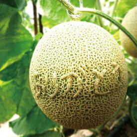 ギフト ありがとうメロン 足守メロン アールスメロン マスクメロン 岡山県産 1玉入り 約1.6-1.8kg 糖度14度以上 販売中 農家直送 もぎたて発送 melon