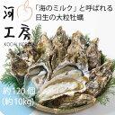 日生 牡蠣 ひなせ 岡山 日生の牡蠣 カキ 一斗缶 約100-120個 約10kg Oyster 加熱用 殻付き牡蠣 産地直送 収穫後即発送