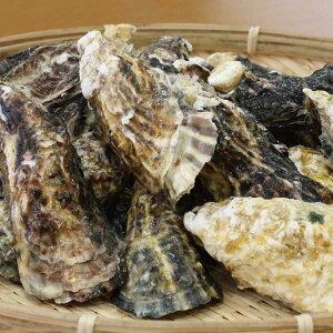 牡蠣 カキ かき 岡山 北木島 ひながき 殻付き Mサイズ 3kg 約37粒-50粒 1年牡蠣 加熱用 1粒約60g-79g フレッシュ 電子レンジ用 容器付き 取り寄せ