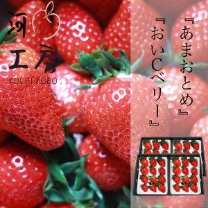 ギフト用 晴れの国 苺 いちご イチゴ あまおとめ&おいCベリー 各2パックずつ 1パック12個入り 1パック約400g strawberry   産地直送 収穫後即発送 送料無料 一部の地域を除く