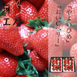 ギフト用 晴れの国 苺 いちご イチゴ やよいひめ&おいCベリー 各1パックずつ 1パック15個入り 1パック約400g strawberry   産地直送 収穫後即発送 送料無料 一部の地域を除く
