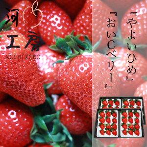 ギフト用 晴れの国 苺 いちご イチゴ やよいひめ&おいCベリー 各2パックずつ 1パック12個入り 1パック約400g strawberry 産地直送 収穫後即発送 送料無料 一部の地域を除く