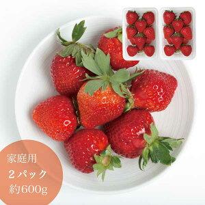 家庭用 晴れの国 岡山 あまおとめ 苺 いちご イチゴ 2パック 約24個 約600g strawberry 取り寄せ 産地直送 収穫後即発送 土耕栽培