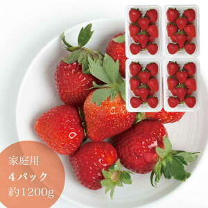家庭用 晴れの国 岡山 あまおとめ 苺 いちご イチゴ 4パック 約48個 約1.2kg strawberry 取り寄せ 産地直送 収穫後即発送 土耕栽培