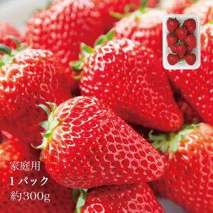 やよいひめ 家庭用 晴れの国 岡山 苺 いちご イチゴ 1パック 約12個 約300g strawberry 取り寄せ 産地直送 収穫後即発送 土耕栽培