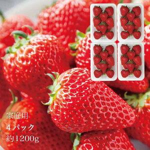 家庭用 やよいひめ 晴れの国 岡山 苺 いちご イチゴ 4パック 約48個 約1.2kg strawberry 取り寄せ 産地直送 収穫後即発送 土耕栽培