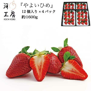ギフト用 やよいひめ 晴れの国 岡山 苺 いちご イチゴ 4パック 48個 約1.6kg strawberry 販売中  産地直送  収穫後即発送 送料無料!! 一部の地域を除く