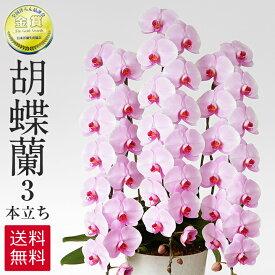 胡蝶蘭 ピンク 3本立ち 45−51輪 ラッピング 送料無料 お祝い 開店祝い 開業祝い 贈り物 大きい 抜群の花持ちの良さ 花の仕立ての美しさ