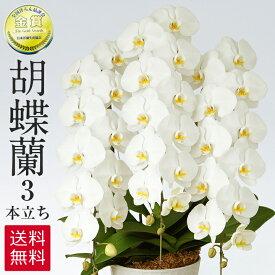胡蝶蘭 白 3本立ち 39輪 ラッピング 送料無料 お祝い 開店祝い 開業祝い 贈り物 大きい 抜群の花持ちの良さ 花の仕立ての美しさ