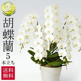 胡蝶蘭 白 5本立ち 60輪 ラッピング 送料無料 お祝い 開店祝い 開業祝い 贈り物 大きい 抜群の花持ちの良さ 花の仕立ての美しさ