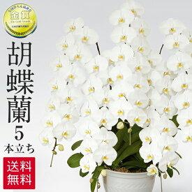 胡蝶蘭 白 5本立ち 75輪 ラッピング 送料無料 お祝い 開店祝い 開業祝い 贈り物 大きい 抜群の花持ちの良さ 花の仕立ての美しさ