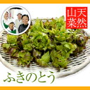 天然山菜ふきのとう 500g(採取者・笑顔の里)天然物/天然ふきのとう/天然フキノトウ/天然蕗のとう/天然蕗の薹/-