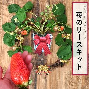苺のリース