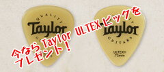 TaylorAcademy10【送料無料】【TaylorULTEXピックをプレゼント!】