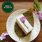 母の日 ギフト スイーツ サクラハニーのレアチーズケーキ [6個入り]