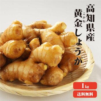 【送料無料】高知県産黄金生姜(こがねしょうが)1Kg