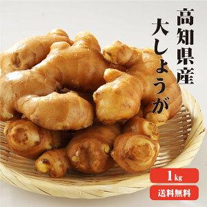 【送料無料】高知県産 大生姜(おおしょうが) 1kg ?生姜 国産 大しょうが 酢しょうが しょうが 紅茶 ショウガ 生姜 保存 生姜 生姜 効能 根生姜