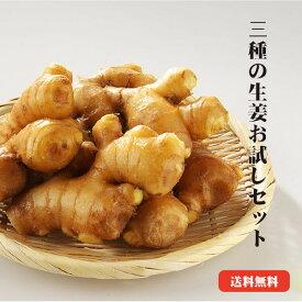 【送料無料】高知県産しょうが お試しセット |生姜 高知 国産 黄金しょうが 大しょうが 三州しょうが お試し