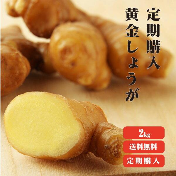 定期購入【送料無料】 高知県産 黄金生姜 2kg