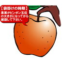 DAIM 果実袋 リンゴ 100枚入り