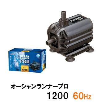 kamihataoshanrannapuro 1200 60Hz(西日本用)