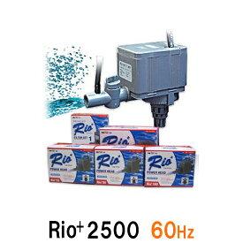 カミハタ リオ Rio+2500 60Hz【送料無料 但、一部地域送料別途】【♭】