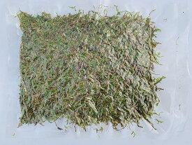 苔【苔の種 1から栽培】マキゴケ用 シノブゴケ 3L 栽培品粉砕パック 説明書付き 苔玉 コケ