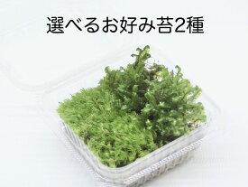 選べるお好み苔2種《苔テラリウム・コケリウム用生苔》 園芸 グリーン インテリア 癒し レイアウト 観賞用 素材 セット パック かわいい おしゃれ