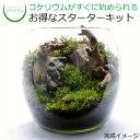 【送料無料 観葉植物 おしゃれ ミニ テラリウム キット コケリウム 苔 コケ 苔テラリウム 苔リウム アクアリウム アク…