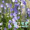【AAS入賞品種】エキナセアシャイアンスピリット(暖色系)9センチポット3号【05P30May15】