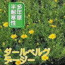 ◆ダールベルグデイジー 苗 9センチポット 3号 【P08Apr16】