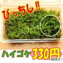 【ハイゴケ】這苔 ハイゴケ 貼るだけで苔玉やお庭が素敵になる!混じりけなしの こけ コケ 苔