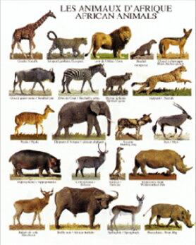ミニポスター(台紙付)African Animals