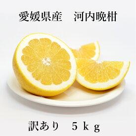 【送料無料】河内晩柑 訳あり 5kg サイズ4L-3S