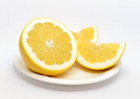 REMICO【送料無料】河内晩柑  ジュース用 10kg 大小ミックス